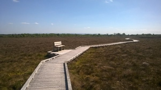 CLARA BOG NATURE RESERVE AND VISITOR CENTRE